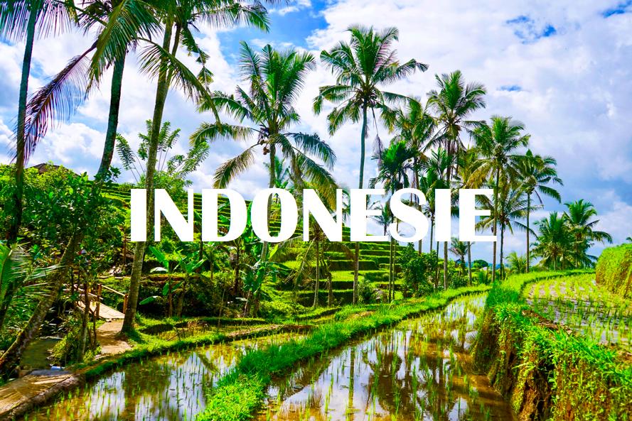 INDONÉSIE : Image.png